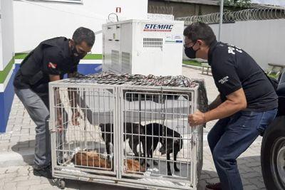 Polícia Civil resgata três cães e indicia donos pelo crime de maus-tratos